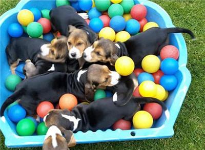 Puppygym